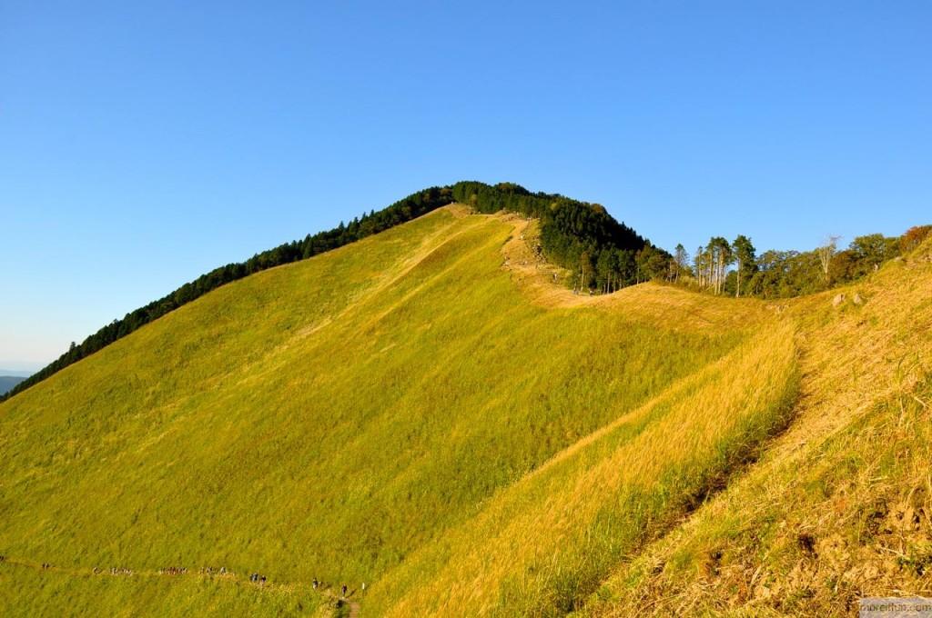 砥峰高原のすすき