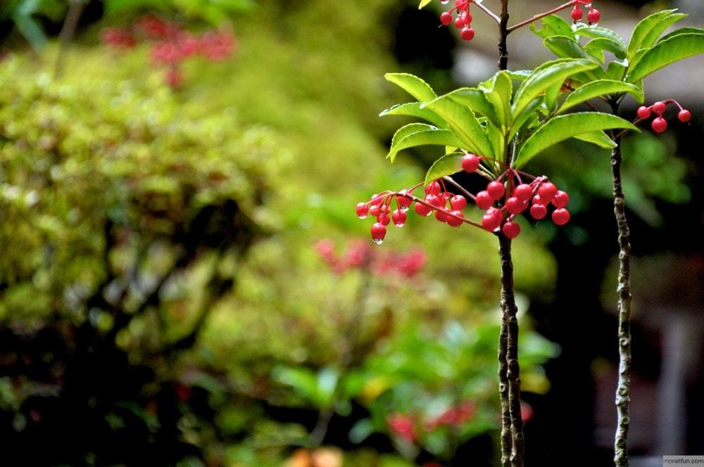 しずくが滴る植物