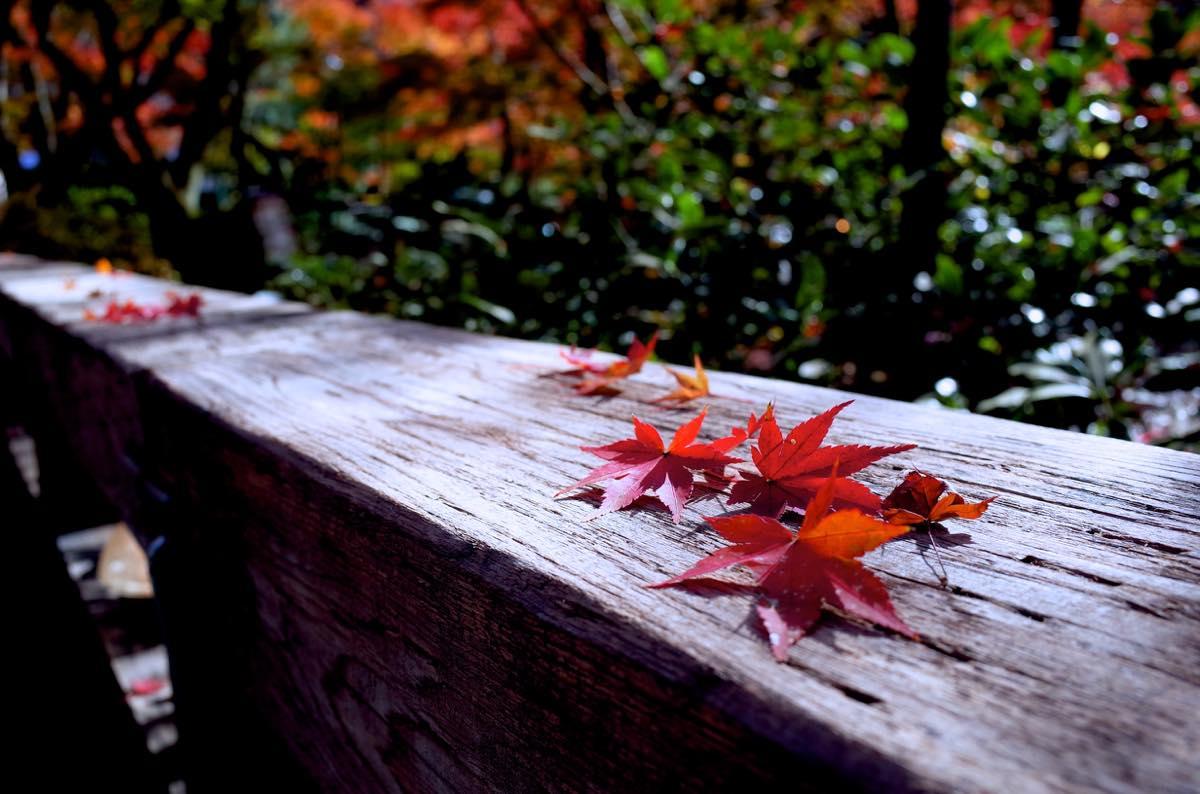 橋の欄干にのる紅葉