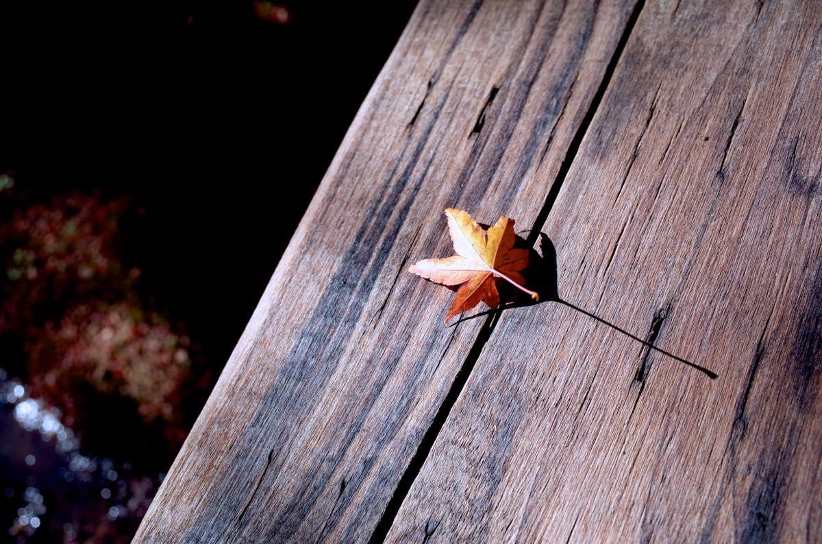 橋の欄干に乗る紅葉