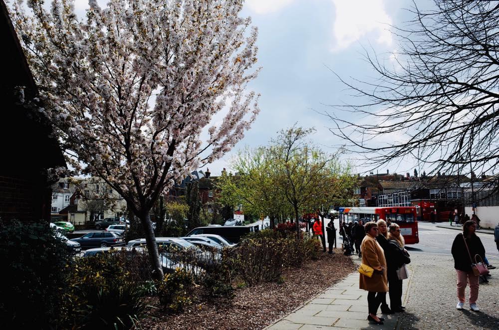 イギリス・ライ駅前の桜の木
