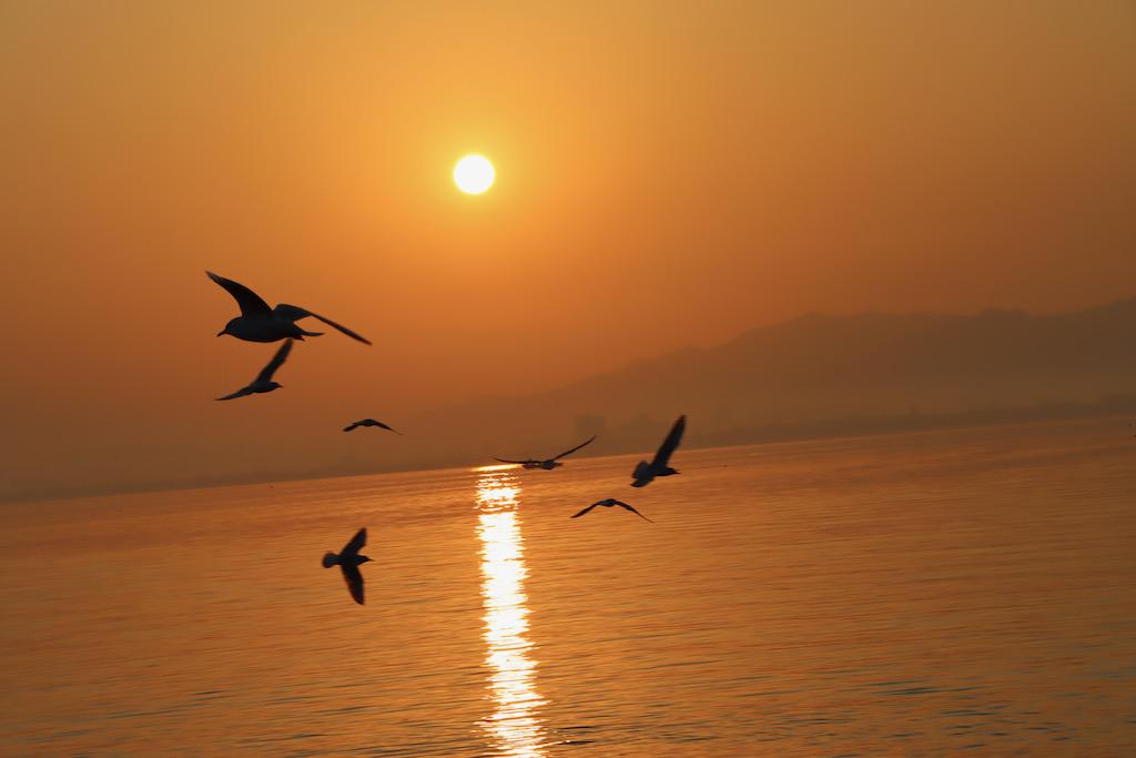 琵琶湖の朝日とかめも