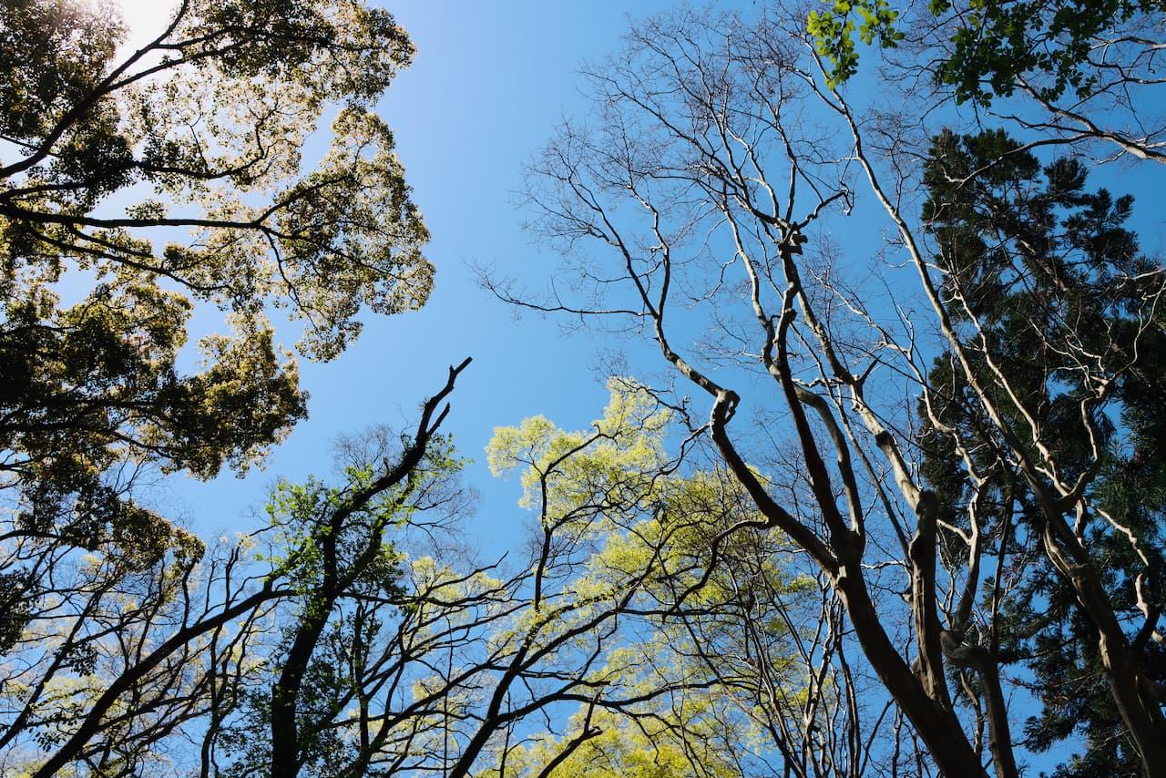 京都府立植物園の芝生公園からの空