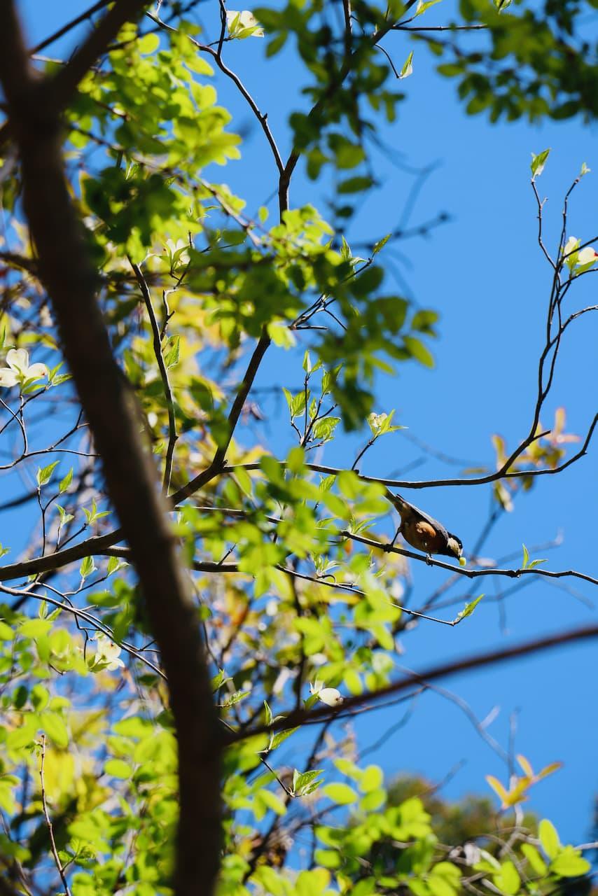 京都府立植物園にいた鳥