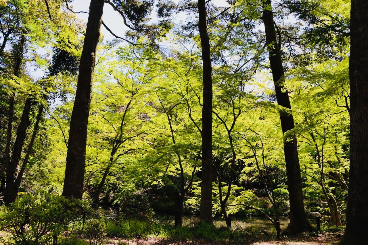 京都府立植物園の木々