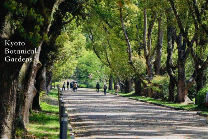 京都府立植物園の並木道